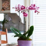 Hallmark Flowers - 10 in Double Spike Orchid Lavender Duo