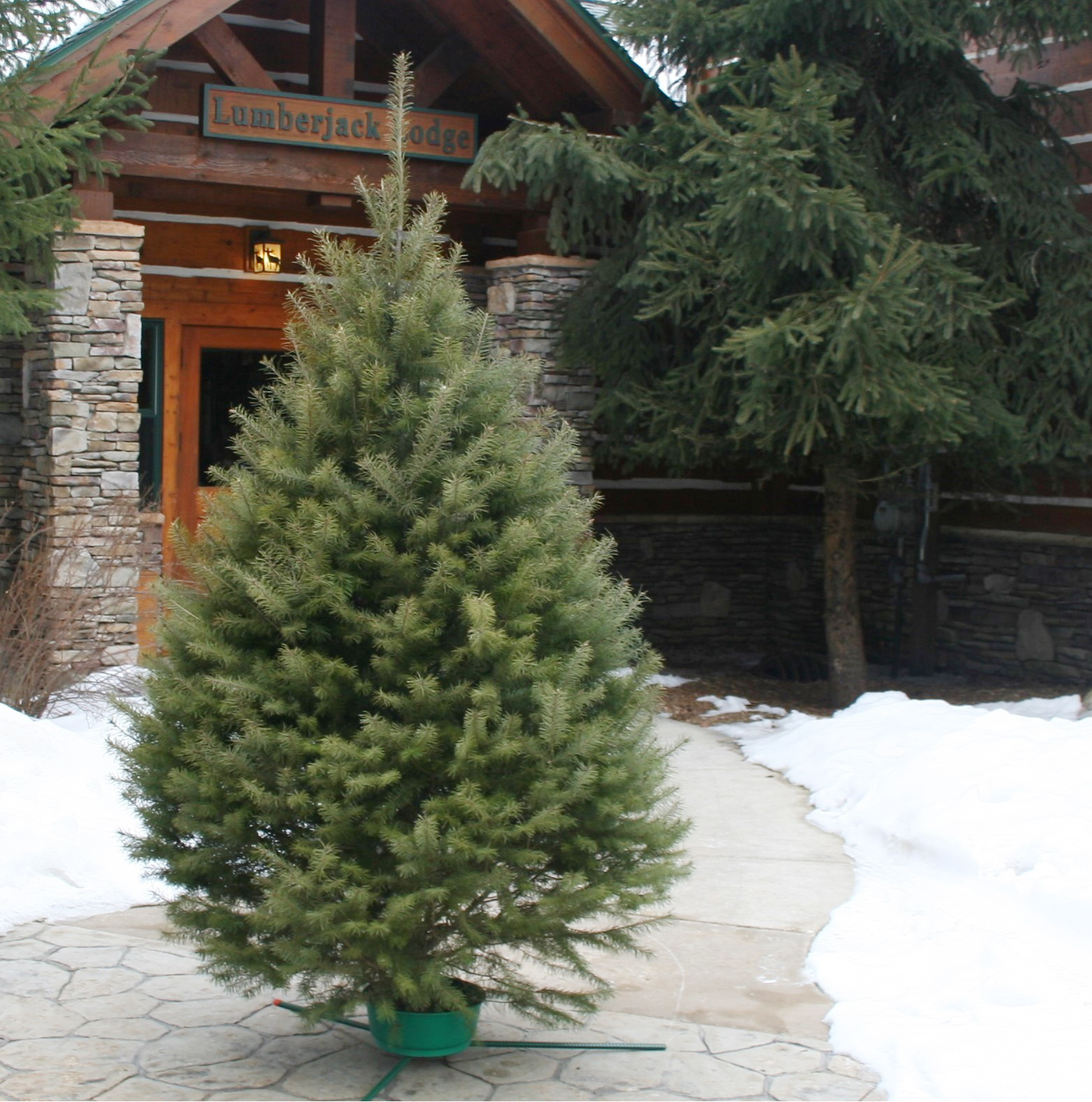 Where Does Christmas Trees Come From: Hallmark Fresh-Cut Christmas Trees Now Available On Amazon